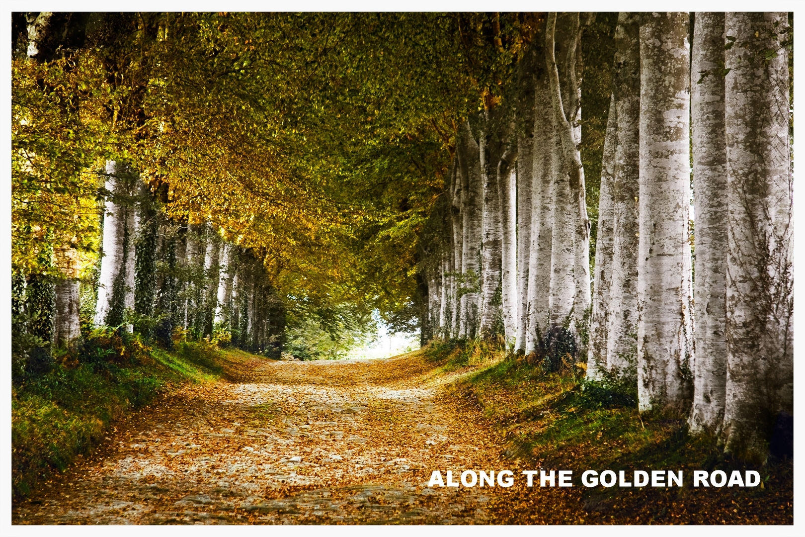 Click to view The golden Road Portfolio