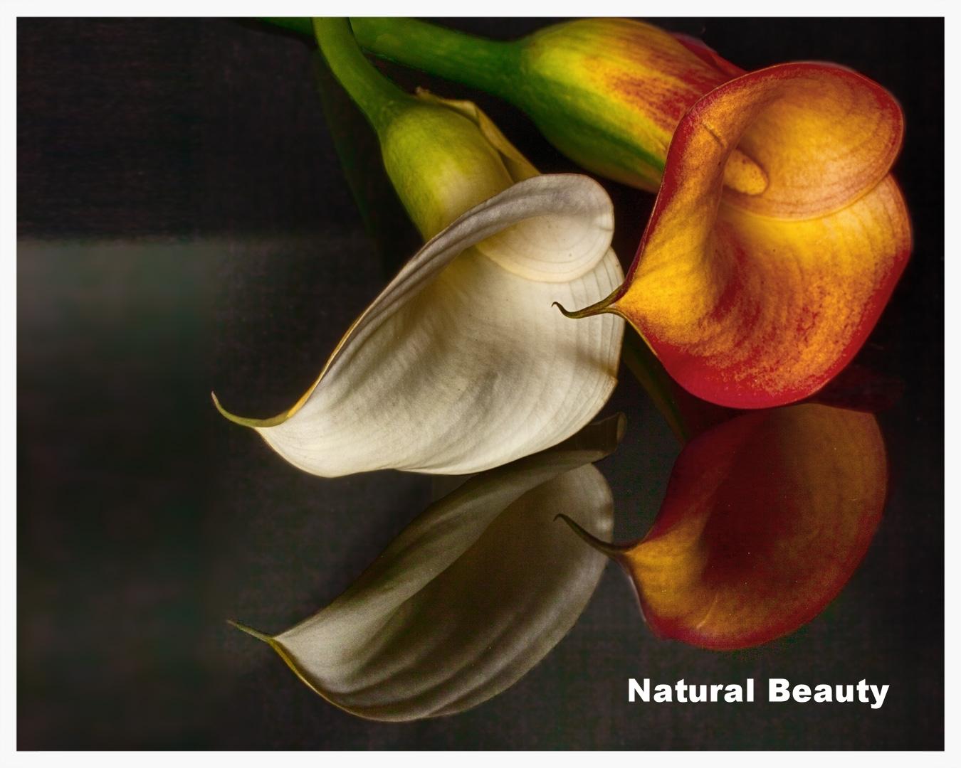 Click to view Natural Beauty Portfolio