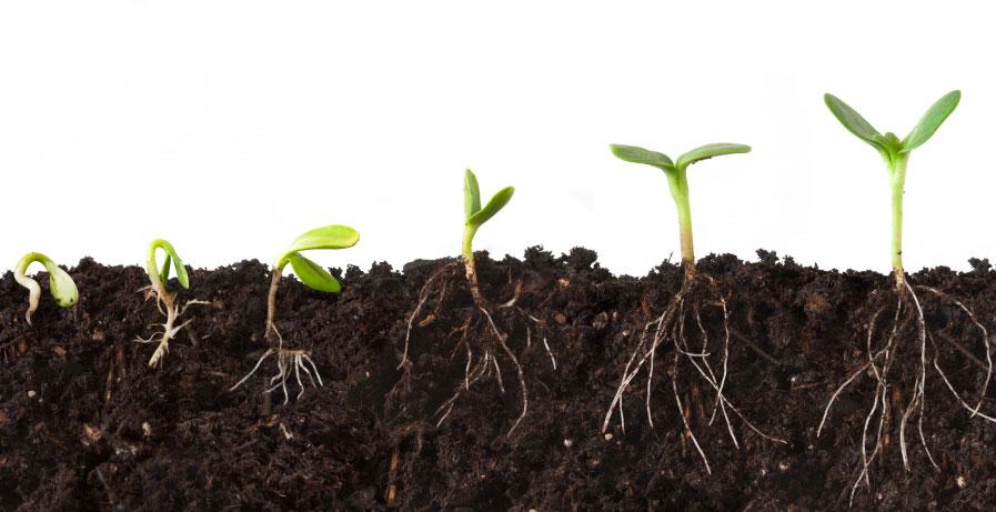 Nourish Roots.jpg