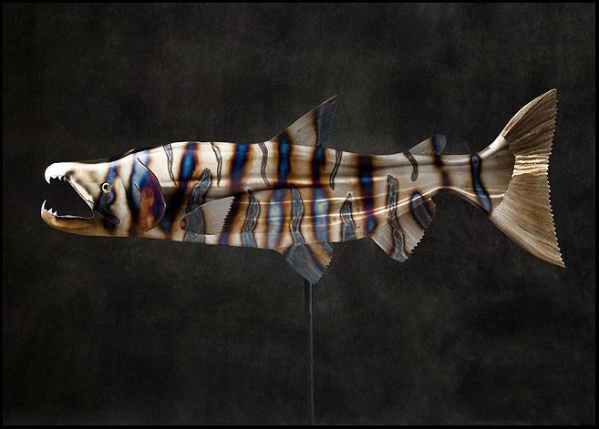 Steel Chum Salmon