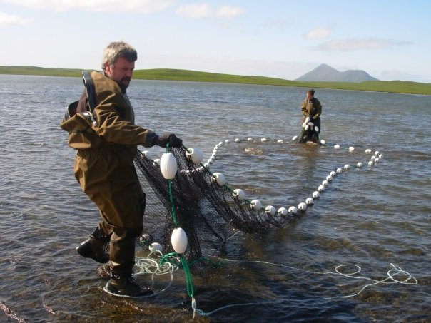 Seining for sockeye salmon on Sanak Island, population zero.