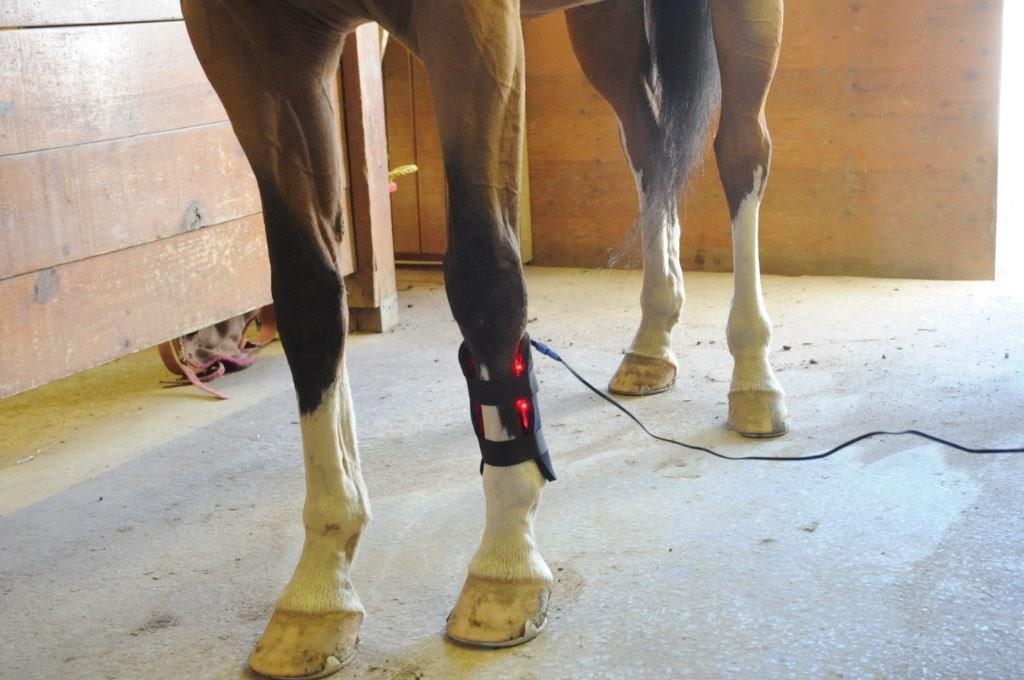 """Gospel's"" Small Light Therapy pad wrapped vertically on tendon/ligament area"