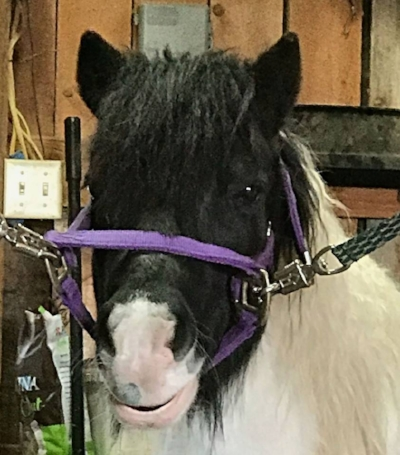 pony_stefH_n.jpg