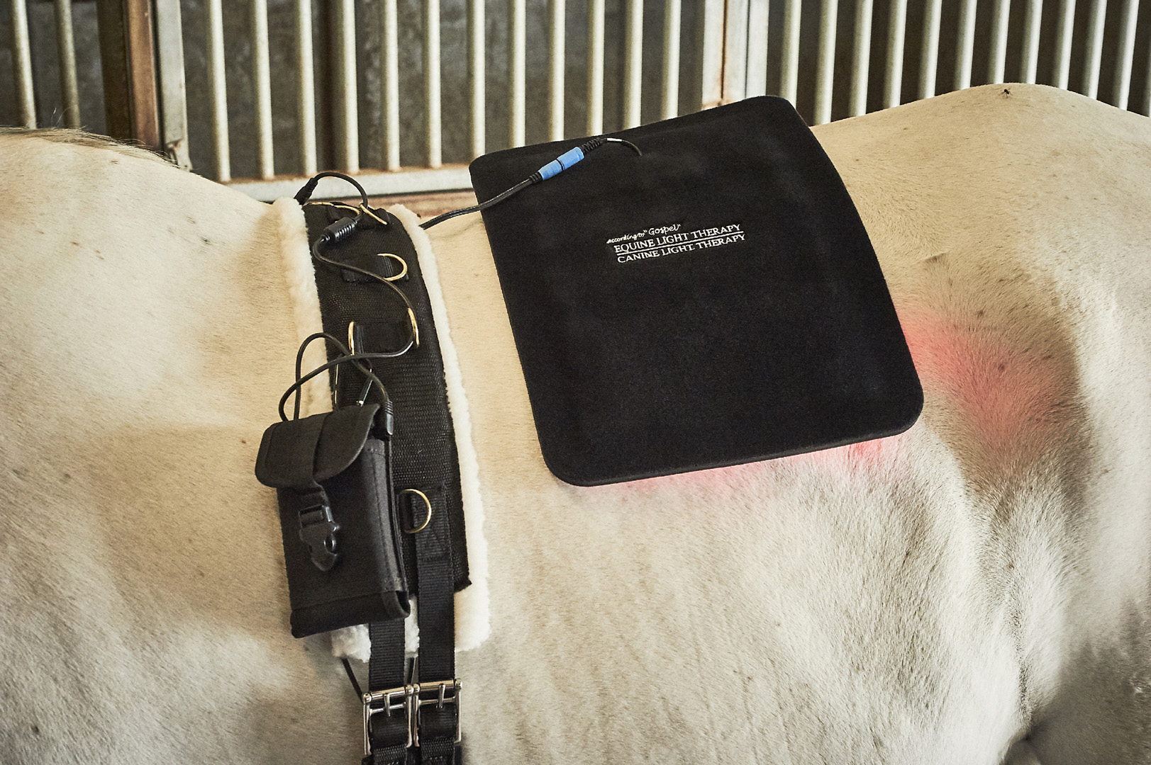 Large Light therapy Pad, Surcingle & Battery Pack Holster