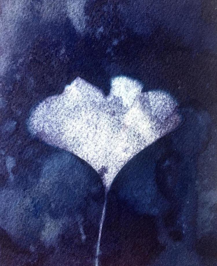 Wet cyanotype + ginkgo leaf