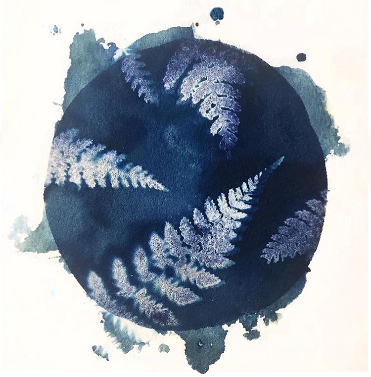 Wet cyanotype, ferns