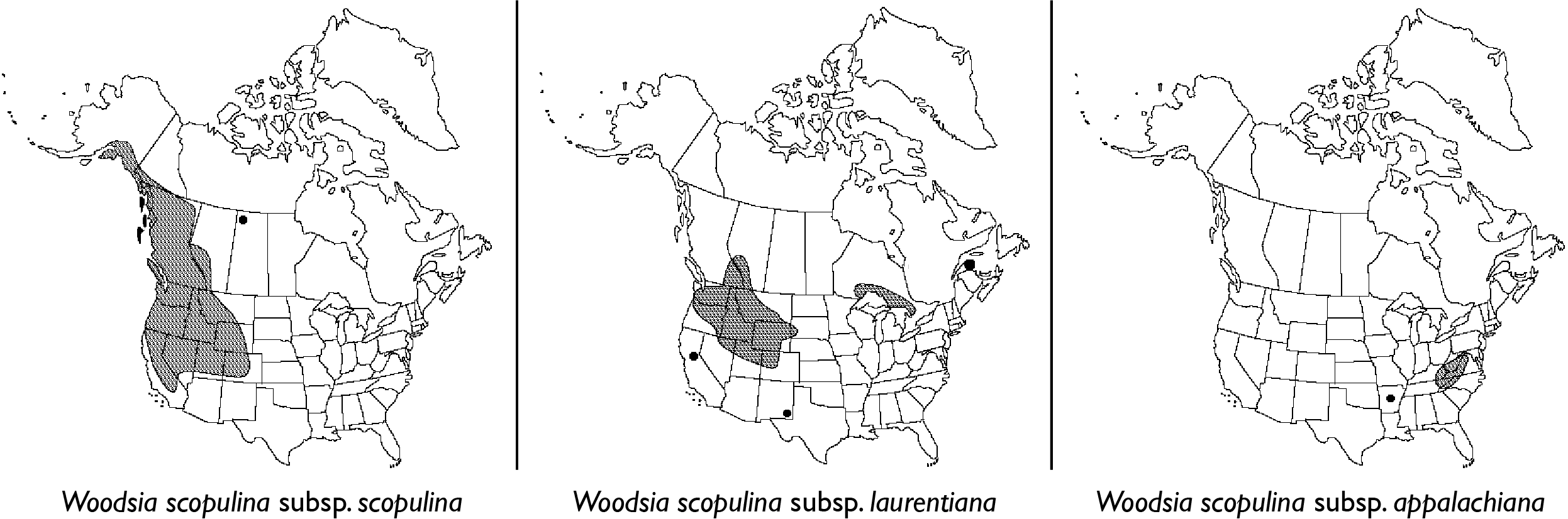 Geographic distribution of the  Woodsia scopulina  complex. putative parents (left, right) of the laurentian shield tetraploid (4x),  Woodsia scopulina  subsp.  laurentiana  (center). Modified from  efloras.org .