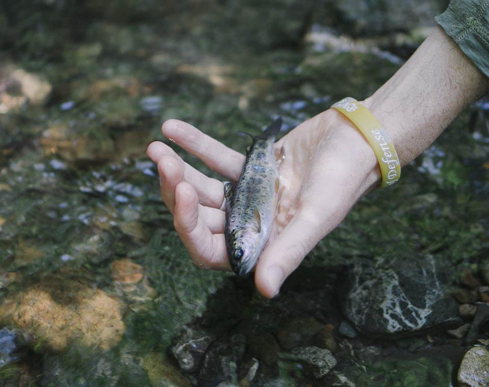 baetis-and-stones-small-streams-9.jpg