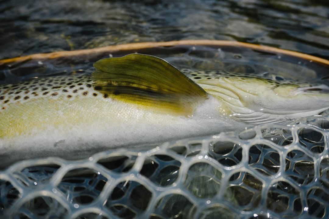 baetis-and-stones-10-essentials-fly-fishing-road-trip-2.jpg