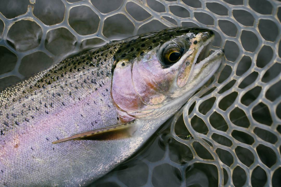 baetis-and-stones-why-i-fish-6.jpg