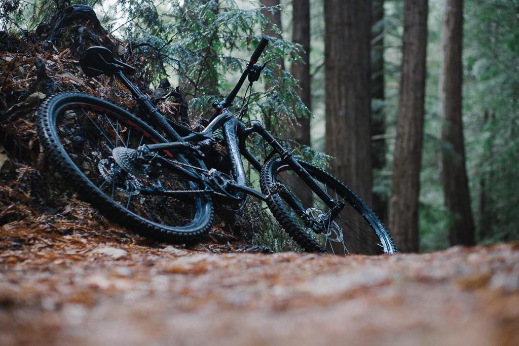 baetis-and-stones-redwood-ride-2.jpg
