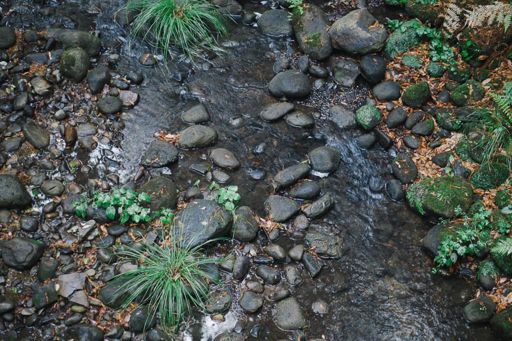 baetis-and-stones-redwood-ride-7.jpg