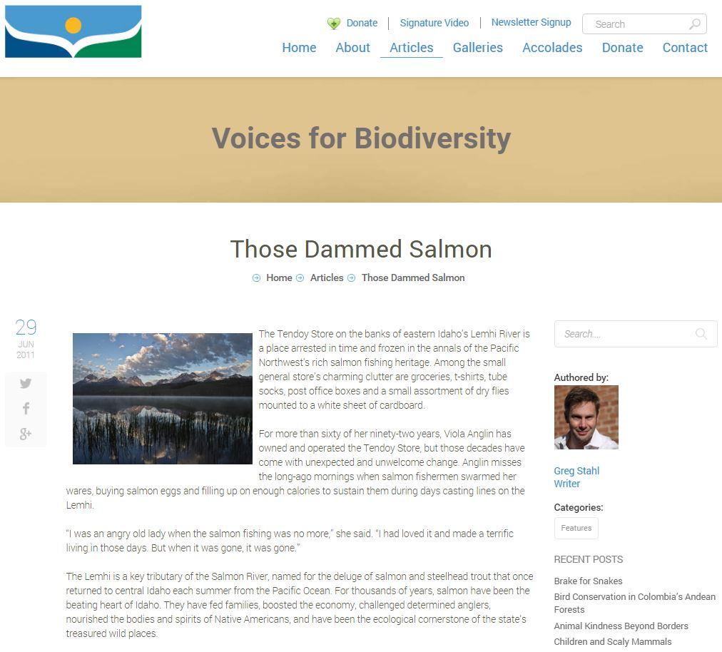 Those Dammed Salmon.JPG