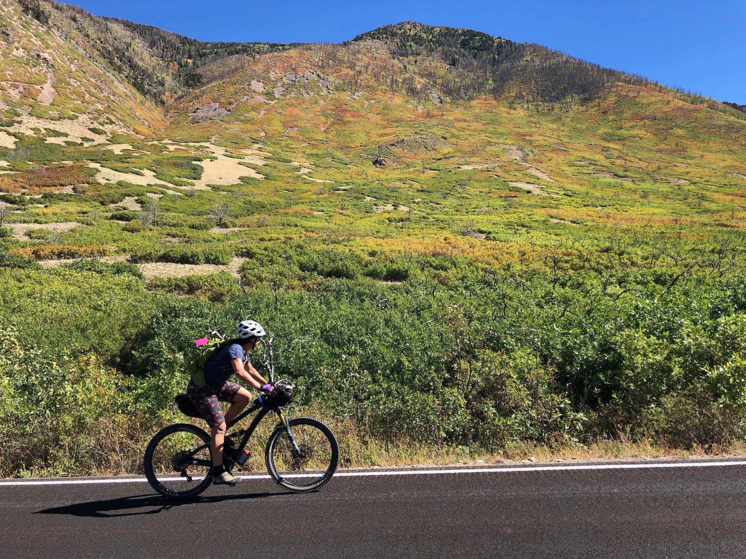 Fall colors in the La Sal Mountains of Utah.
