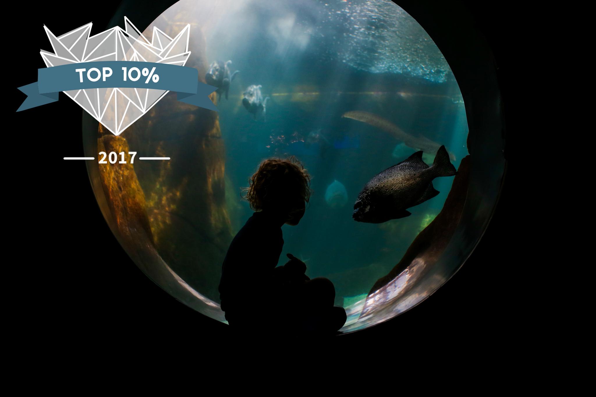 non watermarked 2017 shoot and share photo awards aloha sunshine photography 16October 13, 2016.jpg