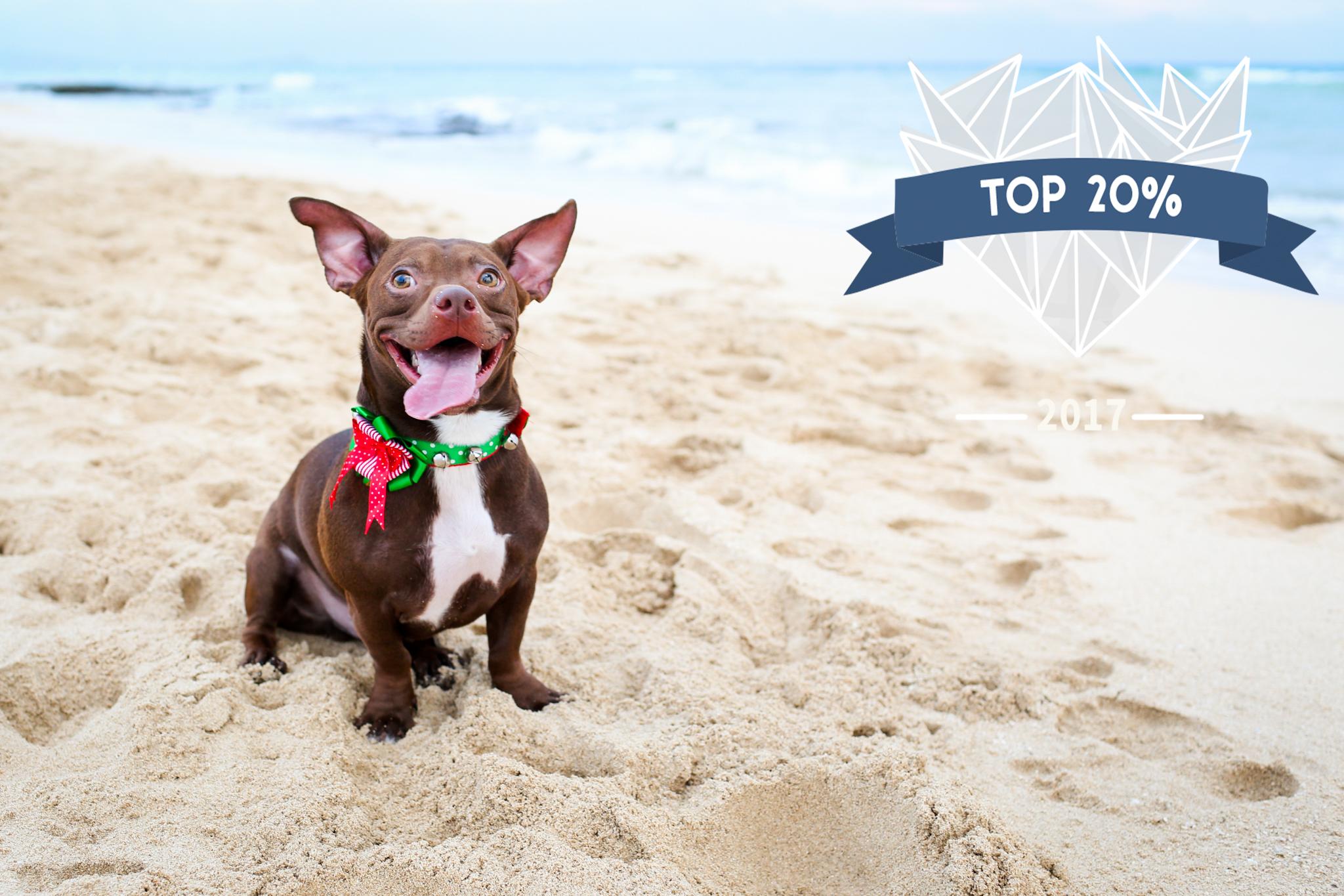 non watermarked 2017 shoot and share photo awards aloha sunshine photography 7November 20, 2016.jpg