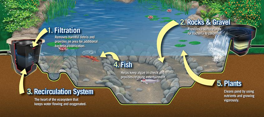 Balanced Ecosystem