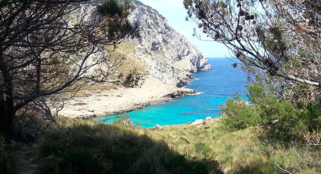 DIMA Mallorca.jpg