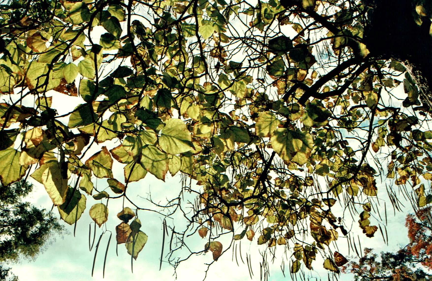 tree overhang copy.jpg