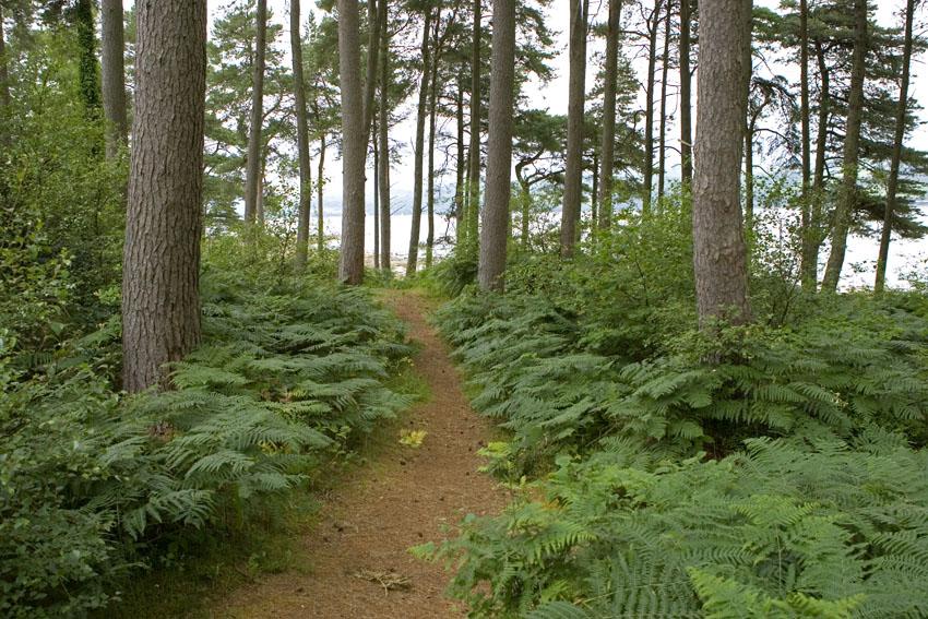Carry Woods.jpg