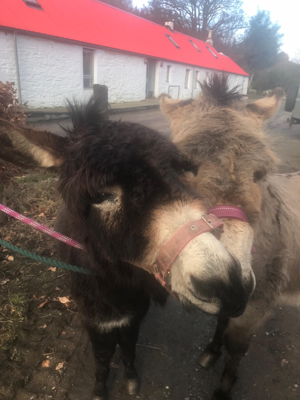 Donkeys.jpeg
