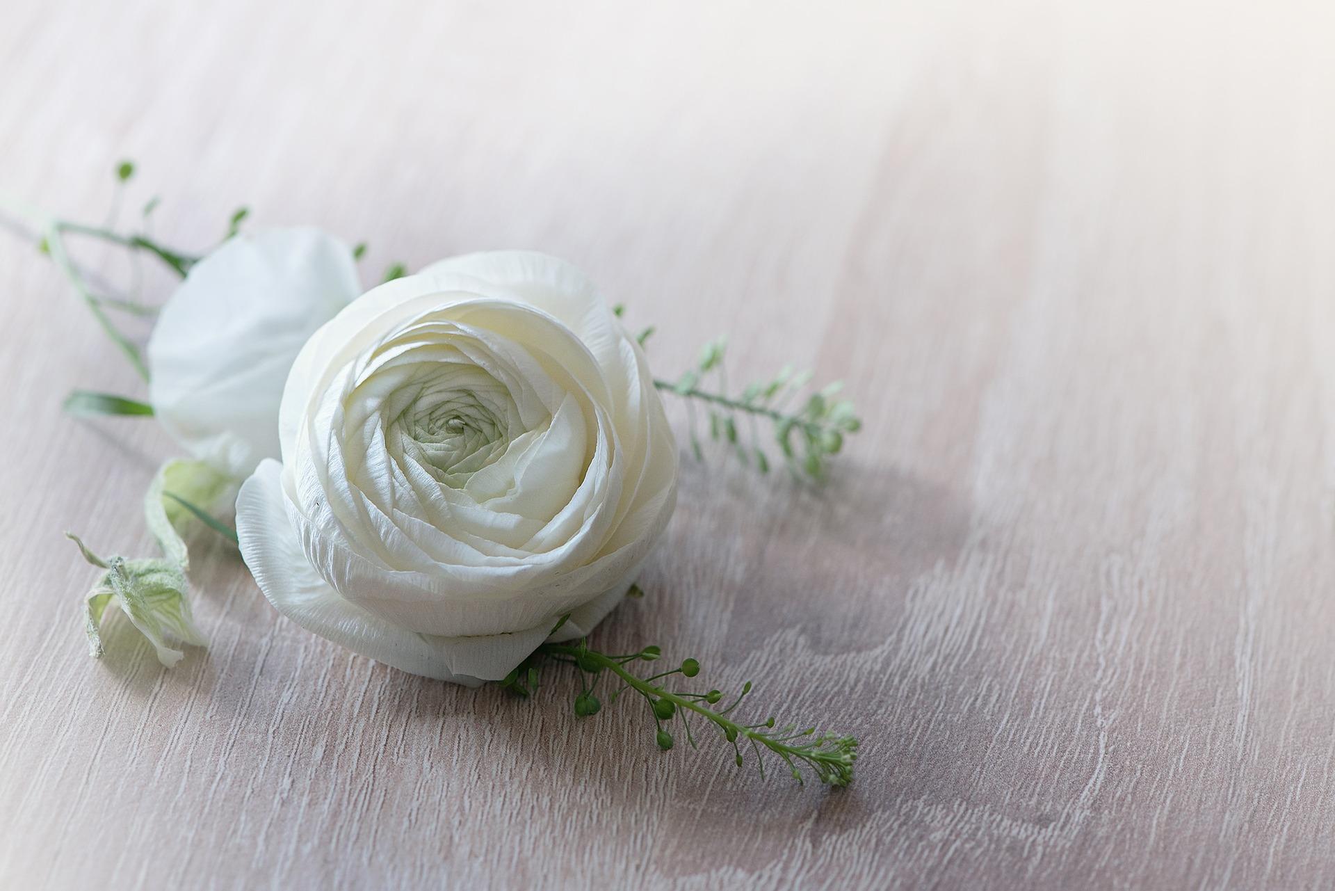 flower-1316753_1920.jpg