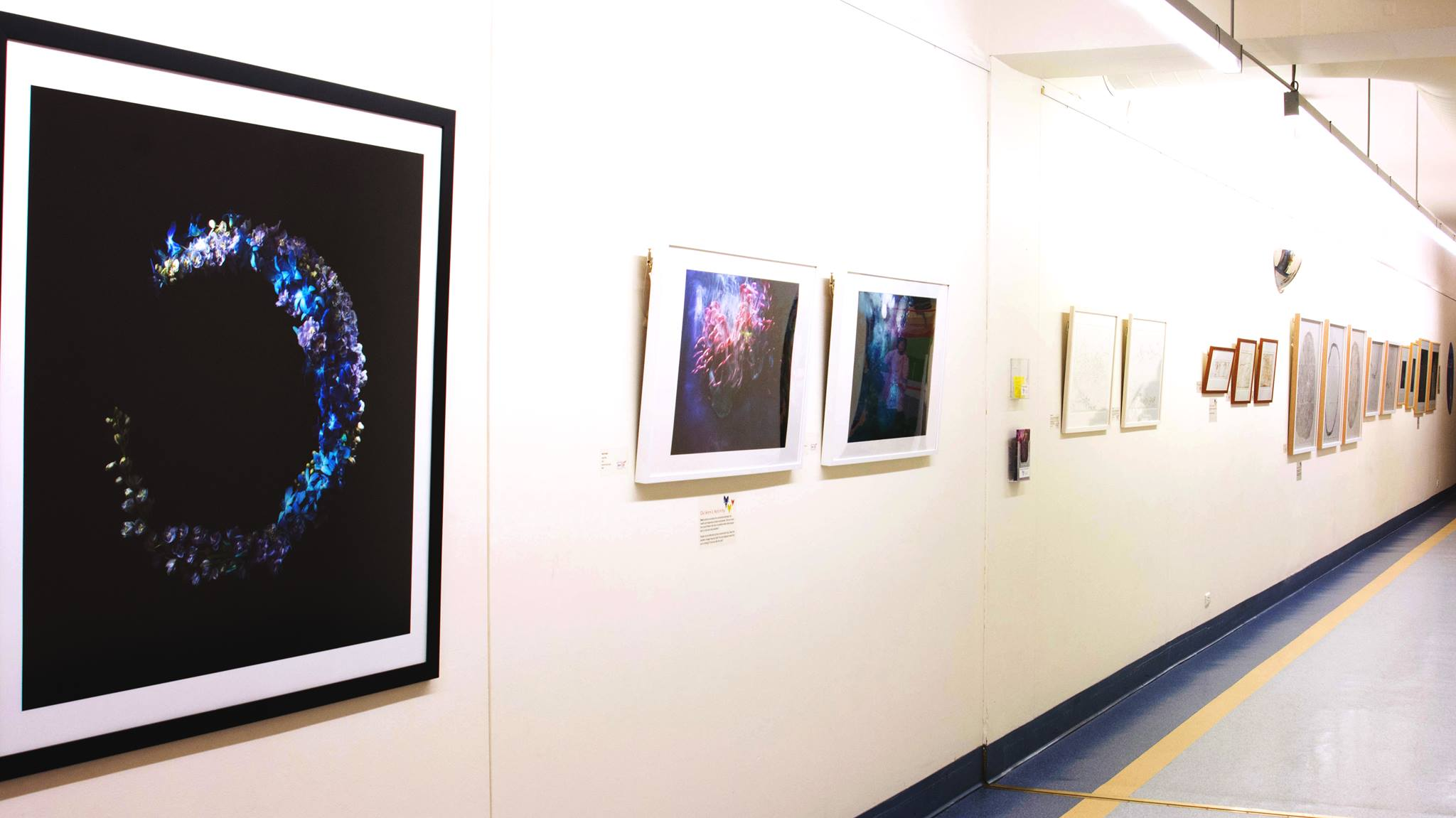Natural Wonder: Documenting the World Around Us  (Installation view), Women's and Children's Hospital. Photo: Saskia Scott.