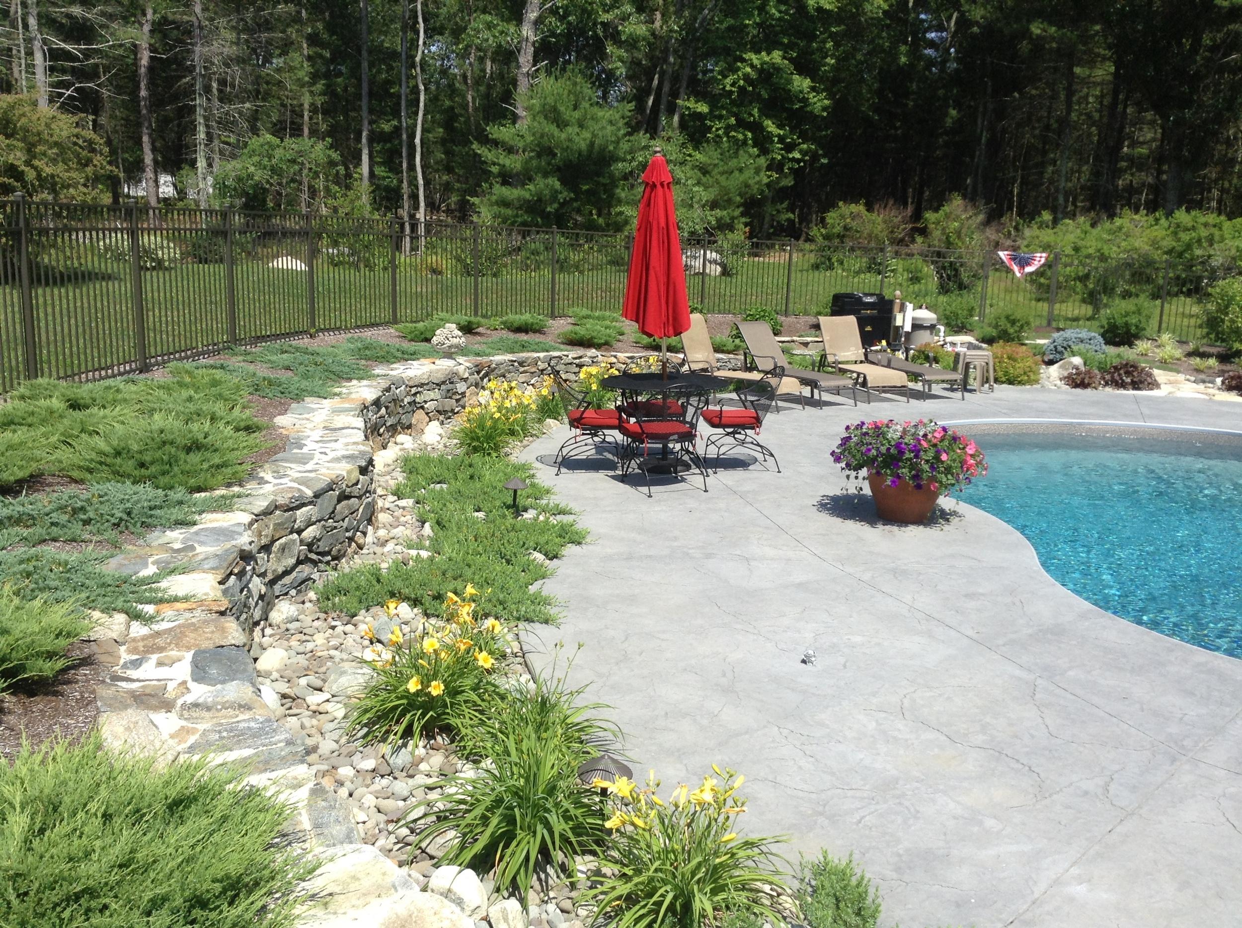 Poolscape Plants 3.JPG