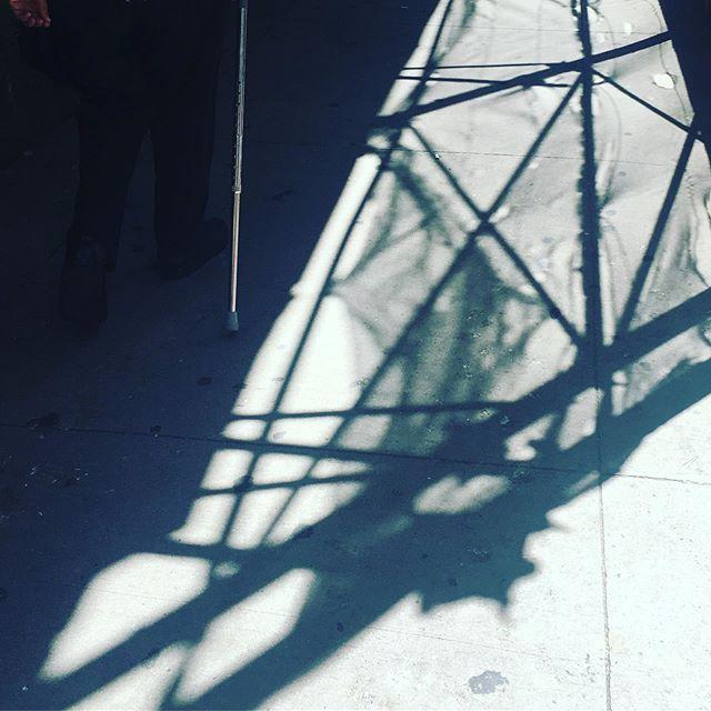 Shadows on 5th  #dogdaysofsummer