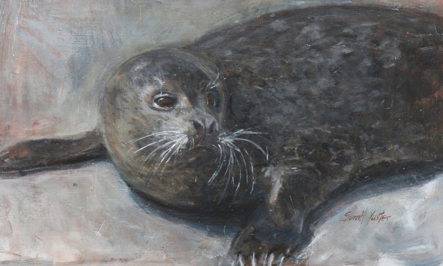 Bernie - Harbor Seal