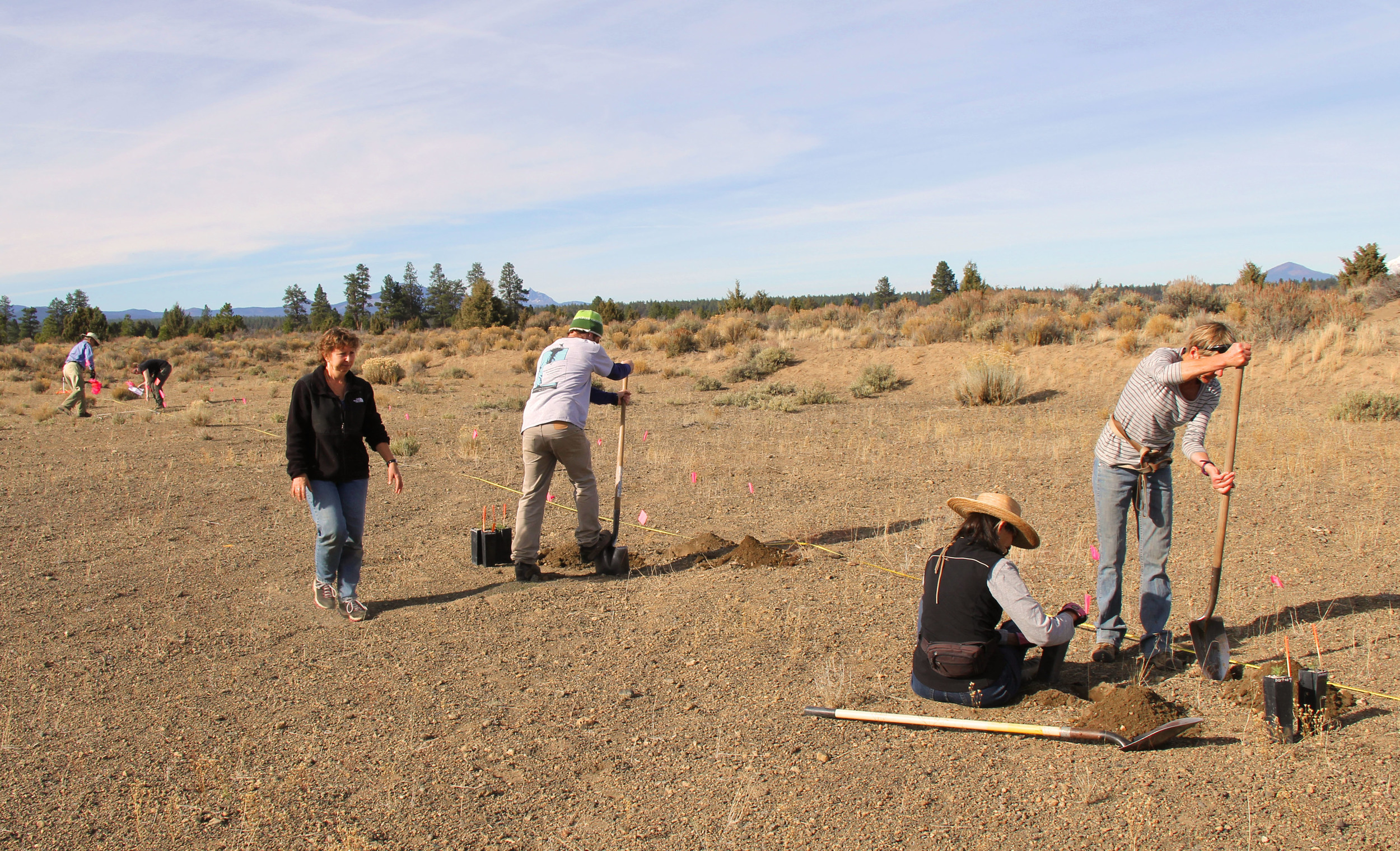 Transect Planting
