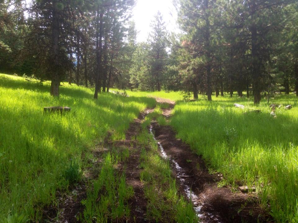 Damage from illicit OHV use in the Ochocos