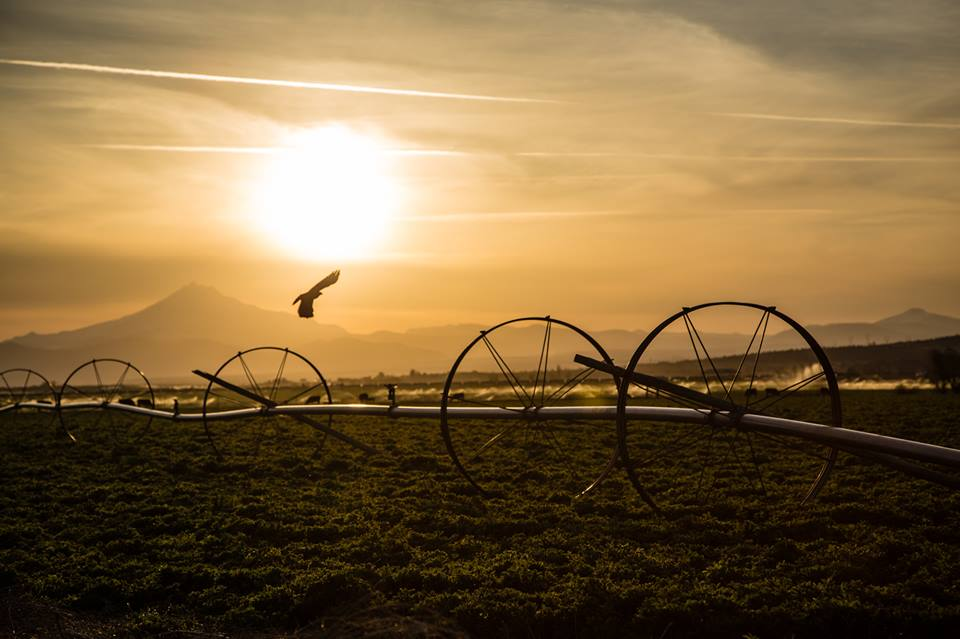 """Oregon is one of the most agriculturally diverse states in the nation, boasting the production of more than 225 different types of crops and livestock, and leading in the production of 13 crops."" ( Oregon Farm & Forest Report, p. 2 ).     Photo: Austin Montreil Leonard"