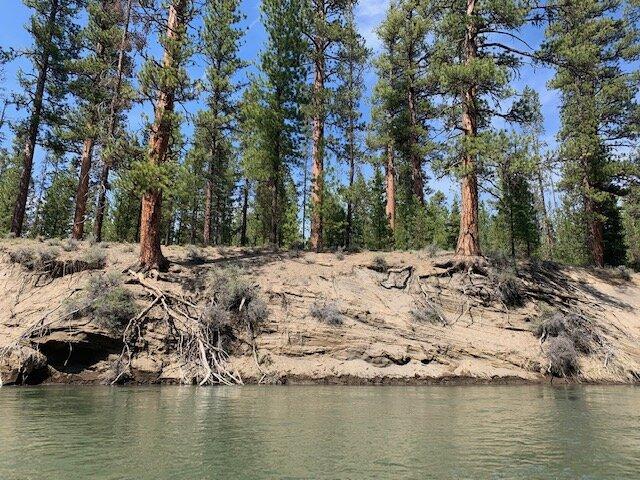 Photo of Deschutes River bank erosion