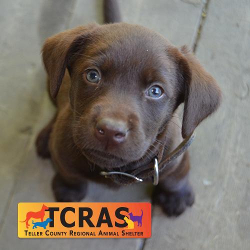 tcras puppy.jpg