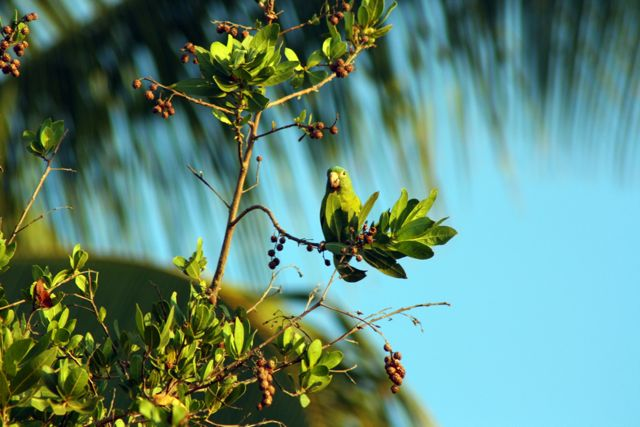 Costa Rica059.jpg