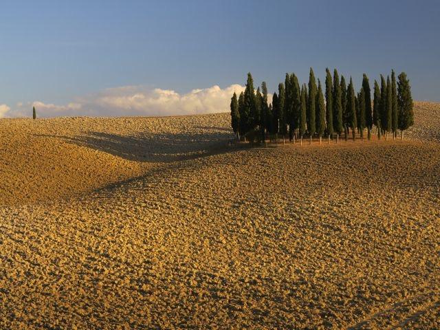 TuscanLandscape.jpg