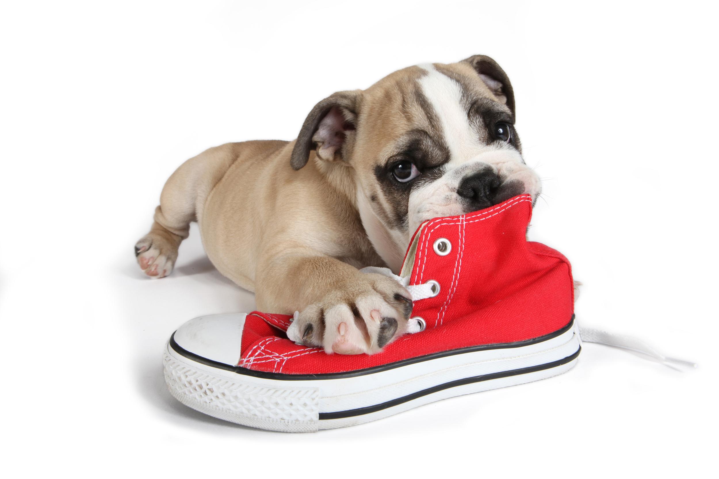 best veterinary behavior consultationsdog trainer in austin, texas