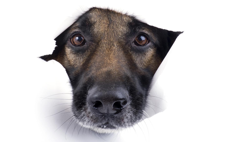 private dog training Austin, Texas veterinary behaviorist