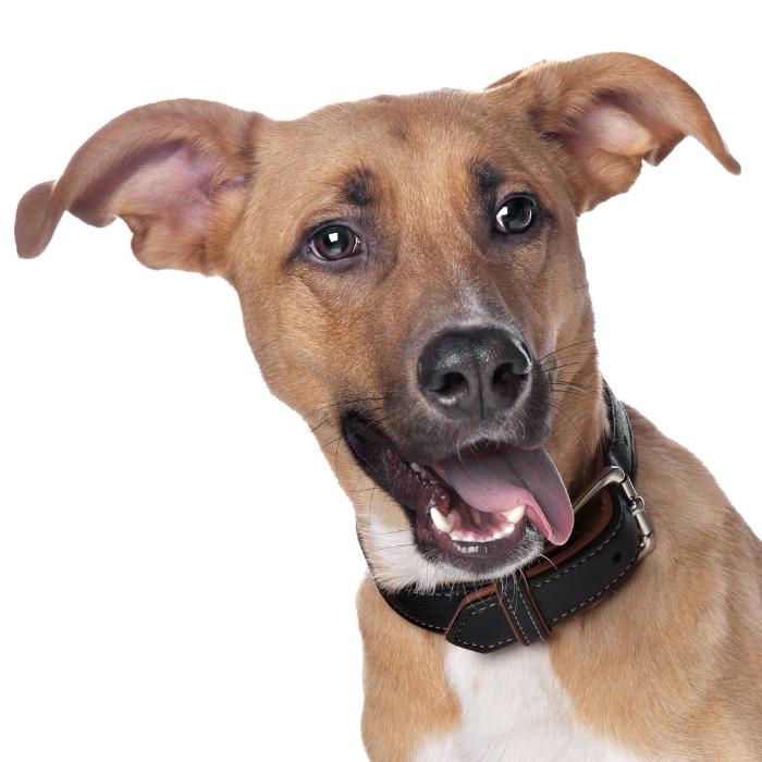 animal behavior and training seminars