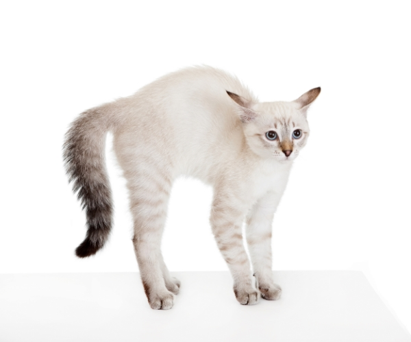 Anxiety, Fears, and Phobias for Cats
