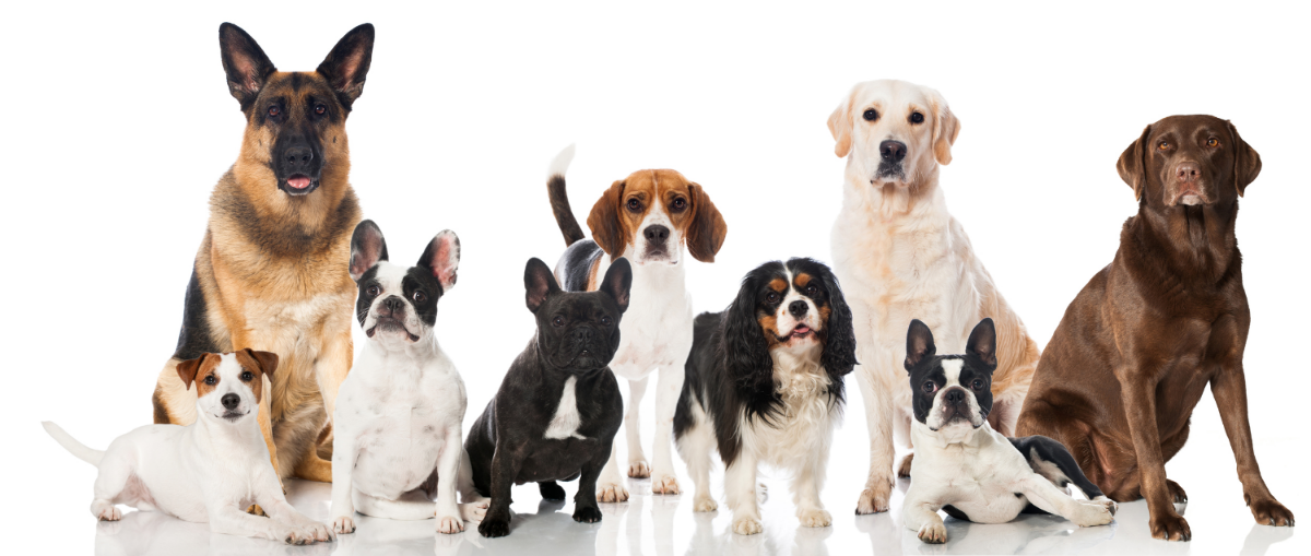 Veterinary behavior consultations articles and websites