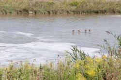 076-Stoney Creek-H-2012.JPG
