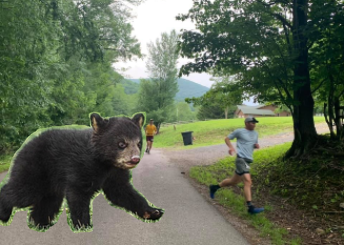 Gigantic black bear cub, which this area is known for, chasing me off the early pavement. Photo of this rare moment thanks to Mandy Helms Sullivan.
