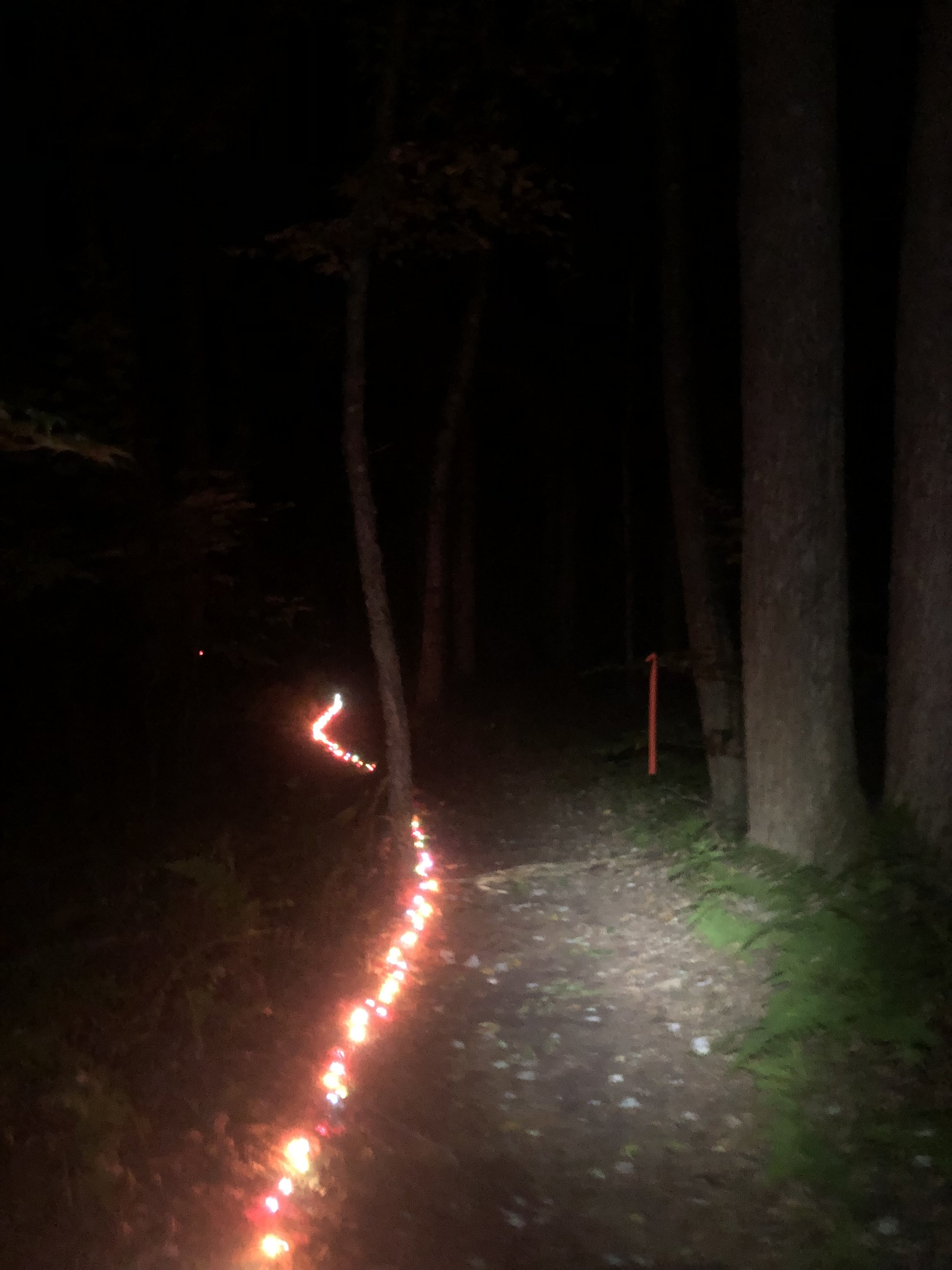 The entire last 40 miles of the course was lit with Christmas tree Lights. Yeah right.