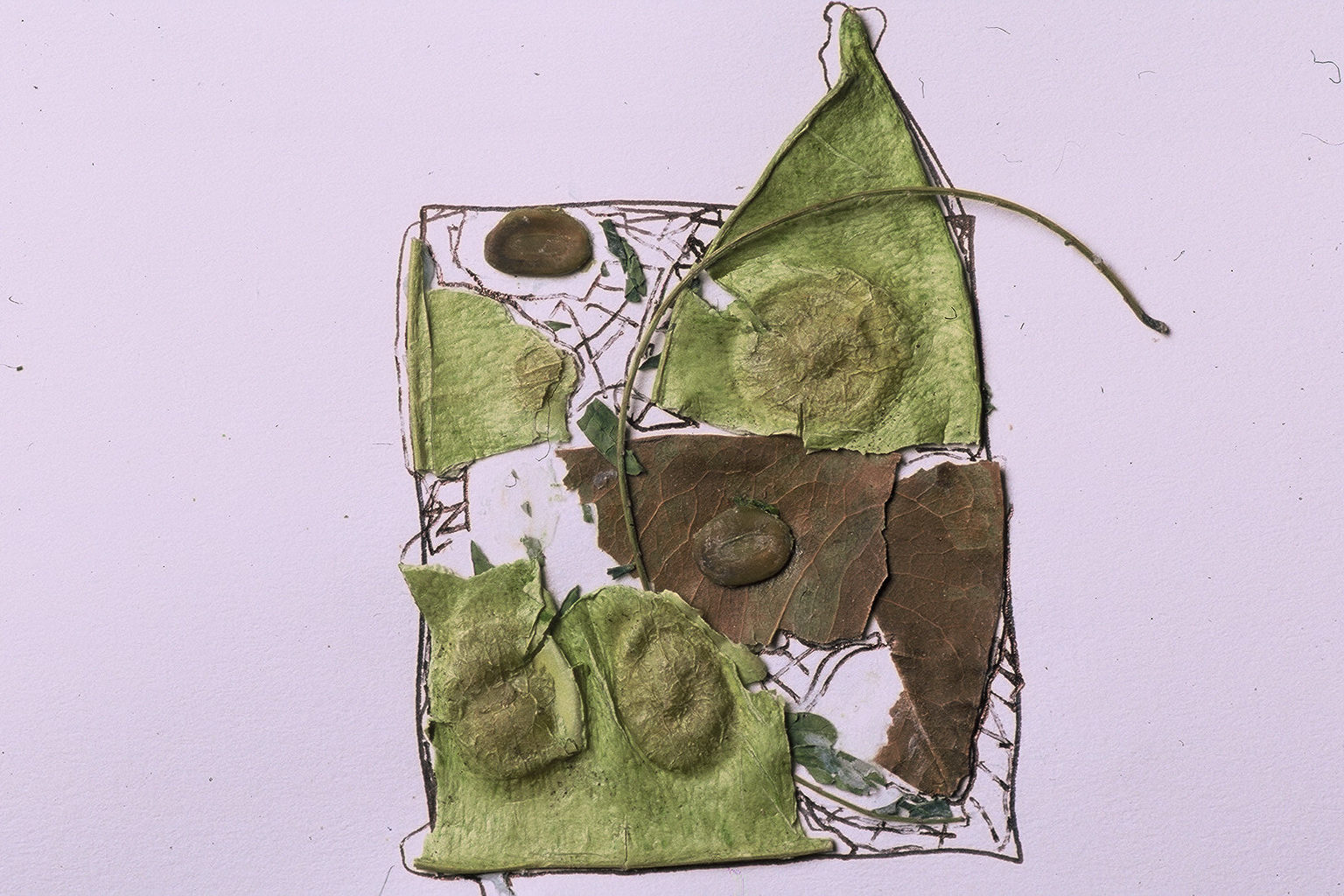 Pods - Ernest Heminway Home