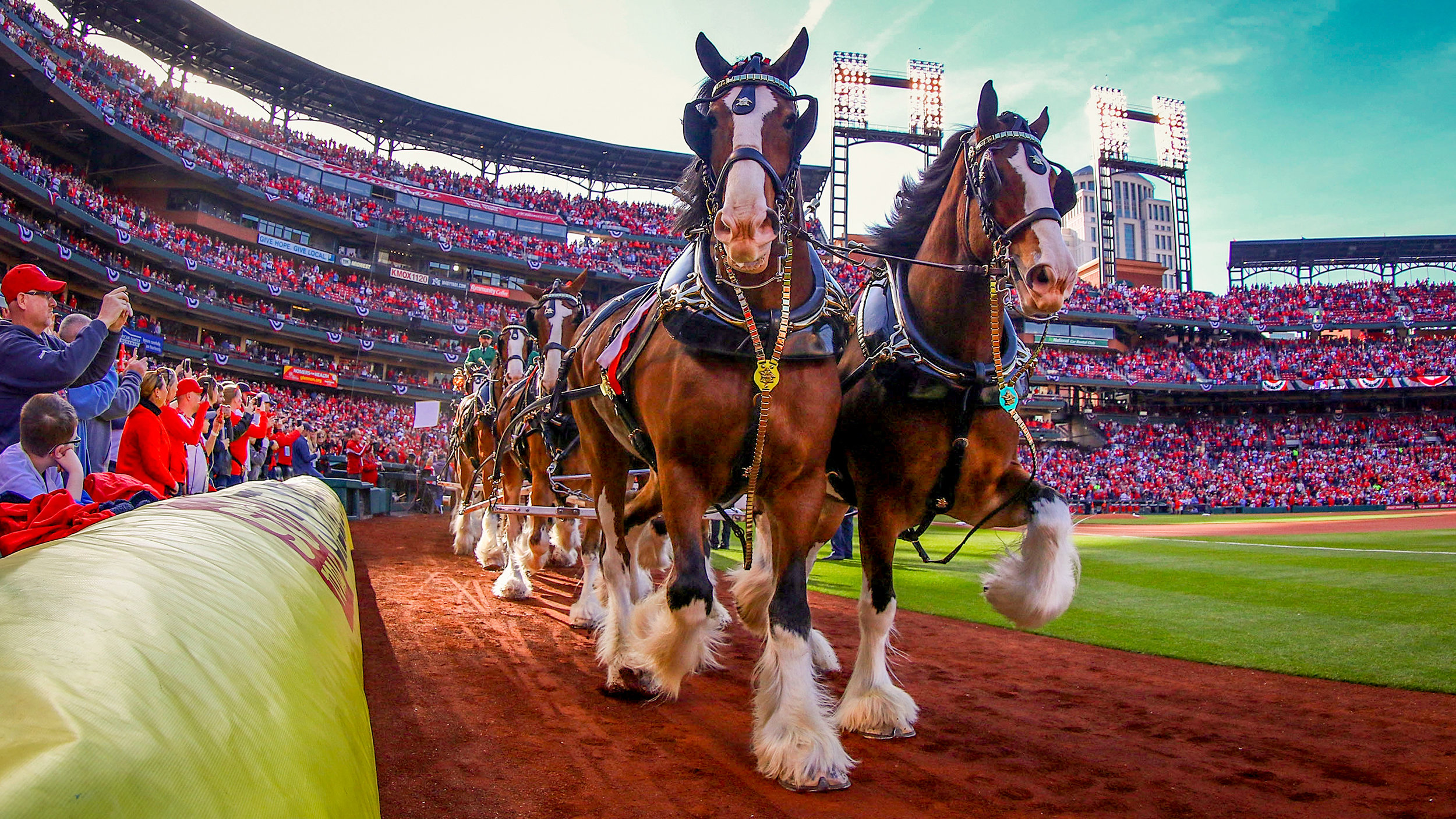 2018 Photo Review 20 - The Budweiser Clydesdales are a common sighting at Busch Stadium! Dilip VishwanatGetty Images.jpg