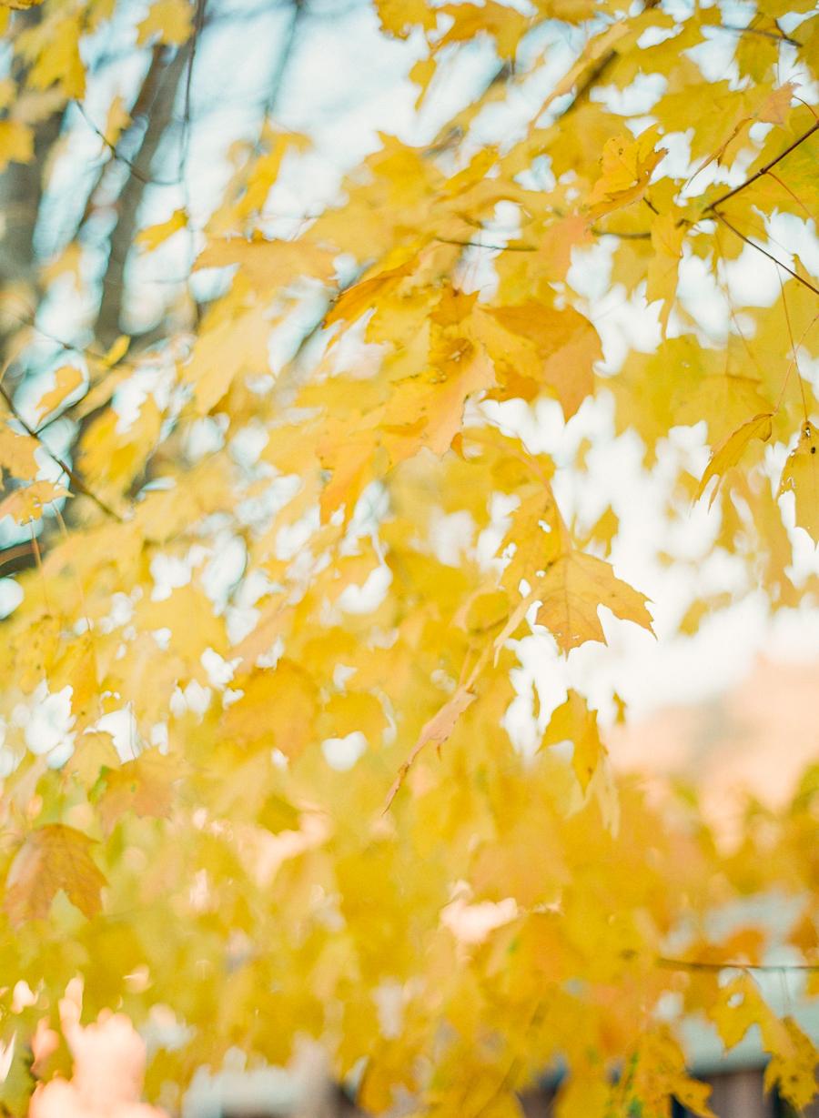fall-1021.jpg