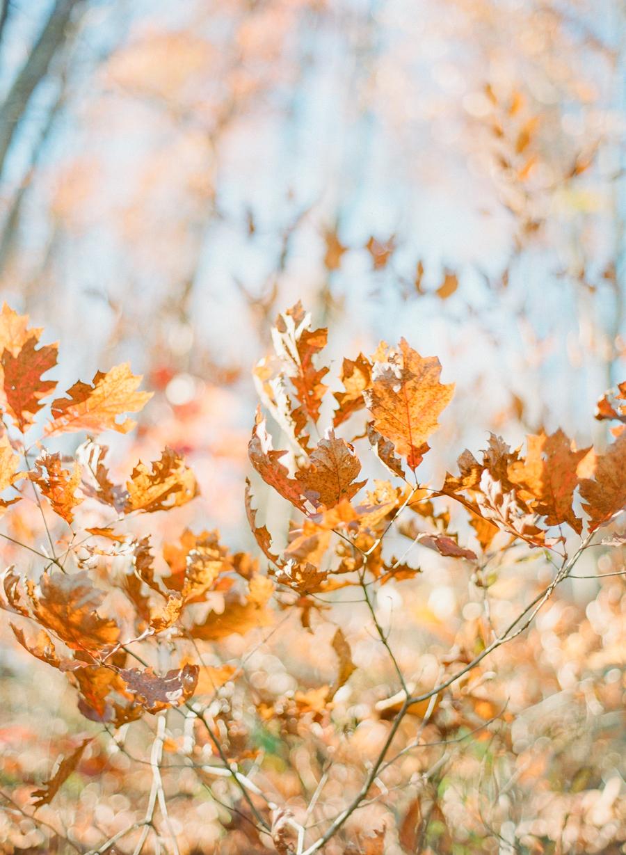 fall-1024.jpg