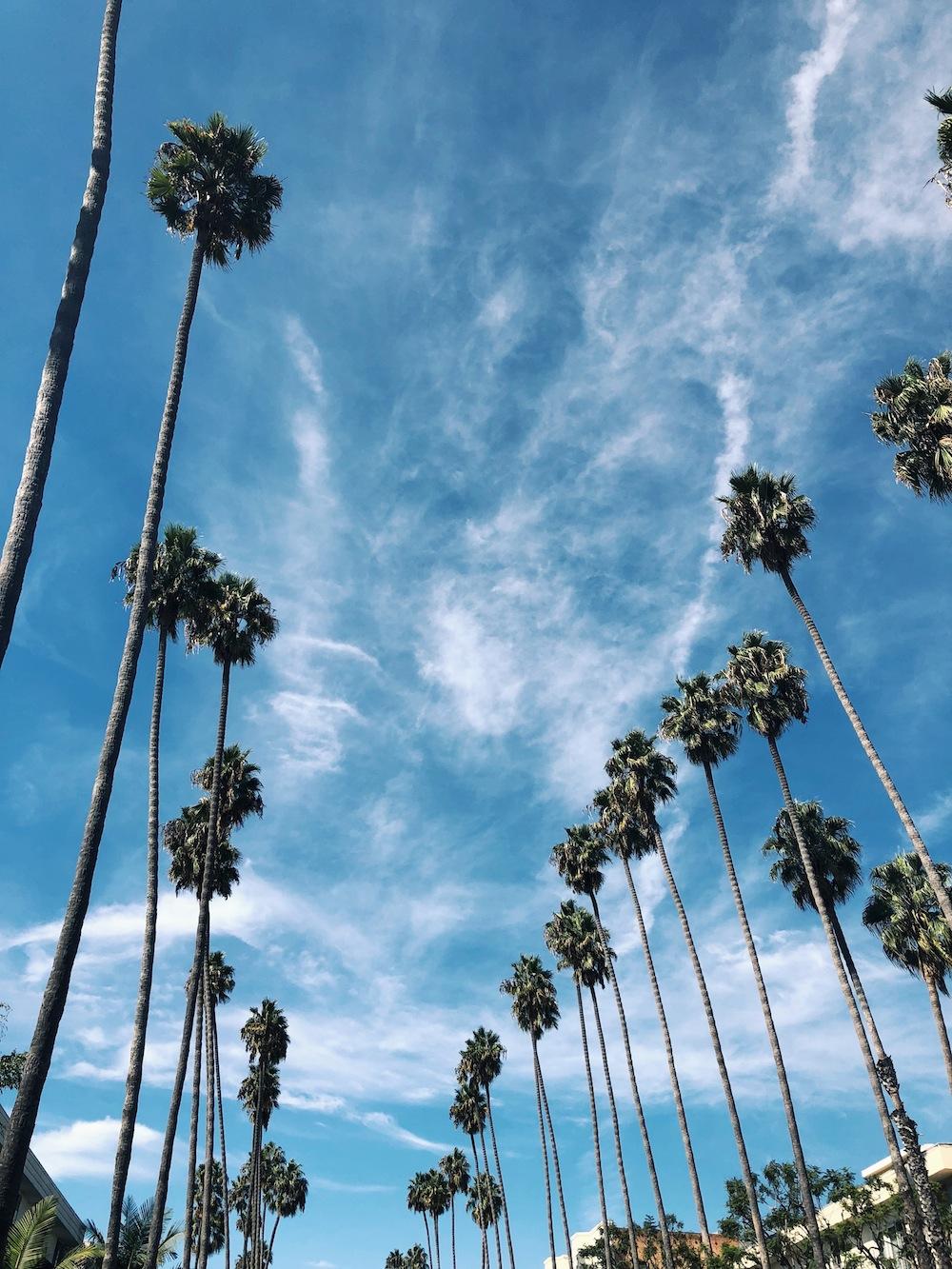 Santa Monica Neighborhood